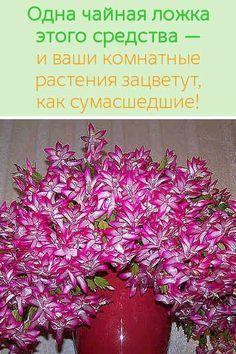 Одна чайная ложка этого средства - и ваши комнатные растения зацветут, как сумасшедшие!