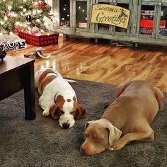 Choosing a Good Commercial Dog Food The rarest of rare moments. Napping at the same time AND in close proximity! Pedigree Dog Food, Dog Food Recall, Food Recalls, Dog Food Brands, Dog Diet, Close Proximity, Raw Food Diet, Homemade Dog Food, Food Allergies