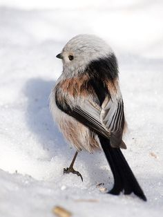 Sweet bird in the snow.