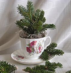 How to make a cute tea cup topiary with extra pine branches