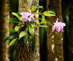 Image result for tree orchids