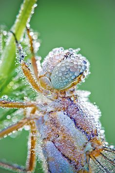 Macro Photographs of Dew-Covered Insects by David Chambon