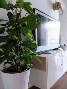 Amores que matan - Espacio Decoro - My home - Potus - Interior Plants