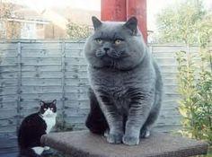 grey #cat