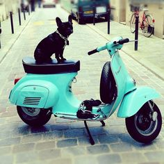 Cute turquoise mo-ped and doggy  It's a Vespa not a moped.