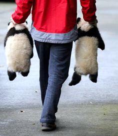 捕獲パンダ もっと見る