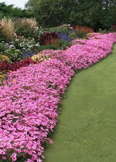 Jardin Express : vente en ligne de jeunes plants en Minimottes, fleurs, plantes, bulbes et accessoires pour le jardin. : Comment créer un massif ?