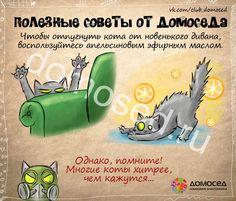 Полезные советы от Домоседа Чтобы отпугнуть кота от новенького дивана, воспользуйтесь апельсиновым эфирным маслом. Однако, помните! Многие коты хитрее, чем кажутся... Чтобы очистить нагрева…
