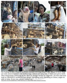 Bless those activists that risk their safety every year to rescue dogs from the meat trade. #YulinGetDogsOffTheMenu #NoToDogMeat #StopYulinDogFestival