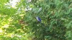 Lovely morning at Balsam Lake provincial park. Blue Jay, Ontario, Good Morning, Canada, Park, Buen Dia, Bonjour, Bom Dia, Parks