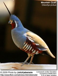 ... birds have relatively short, rounded wings and long, featherless legs