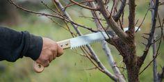 Πότε και πώς γίνεται το κλάδεμα της δαμασκηνιάς   Τα Μυστικά του Κήπου Kitchen Knives, Gardening, Lawn And Garden, Horticulture
