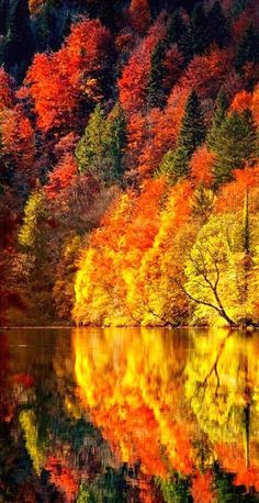 Autumn's fiery reflection  www.facebook.com/loveswish