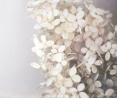 ♕ delicately beautiful
