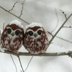 Cold frozen funny owls #animals #animal #animales #mountain #mountainlife #mountainview #winter #winterwonterland #wintertime #snow #snowy #snowflake #snowday #snowmen #frozen #forest #house #home #homesweethome #lake #naturelovers #naturephotografy #pregnant #owl #bird #funny #love #fly #tree #nice