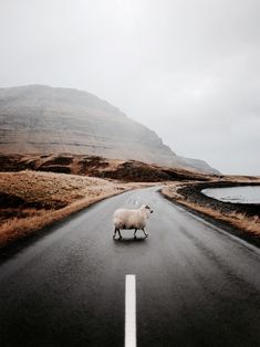 (Still, That Kind of Woman) Sheep crossing a beautiful landscape. Travel photographySheep crossing a beautiful landscape. Travel photography travel photography Sheep crossing a beautiful landscape Travel photography Landscape Photography Tips, Nature Photography, Travel Photography, Photography Ideas, Adventure Photography, Photography Backdrops, Product Photography, Maternity Photography, Animal Photography