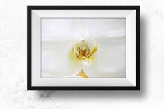 White orchid Digital download art photography by LydiaVideiraLight