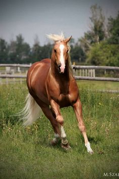 Firen' Hard AQHA Stallion