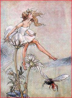 Florence Mary Anderson (1874-1930) è stata una illustratrice inglese di libri. ...