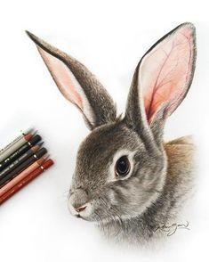Grey Bunny Rabbit. Realistic Color Pencil Animal Drawings. By Robin Gan.