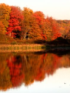 Autumn leaves reflecting on Lake Jeff in the beautiful Catskill Mountains.    View from Lake Jeff cottage