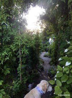 Lifestyle, Garden, Dogs, Summer, Animals, Garten, Summer Time, Animales, Animaux