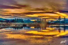 Redwood Twilight by Jasman Mander on 500px