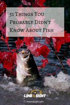 51 THINGS YOU PROBABLY DIDN'T KNOW ABOUT FISH Nothing compares to the thrill of catching game fish. It's an exhilarating experience that keeps anglers coming back for more.