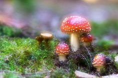 fly agaric by Sebastian Raab on 500px