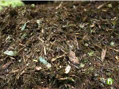 5 Min compost video for Bears Fur, Feathers, Ferns