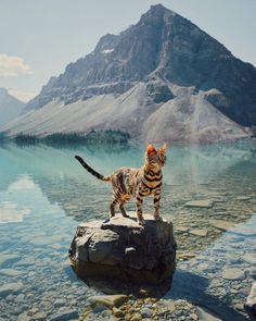 Conheça Suki, a gata viajante que tem vivido grandes aventuras no Canadá | Virgula