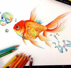 I wanted to take a break from commissions and draw something, so here is a rainbow goldfish. Fish Drawings, Pencil Art Drawings, Realistic Drawings, Colorful Drawings, Animal Drawings, Art Sketches, Colored Pencil Artwork, Color Pencil Art, Colour Drawing