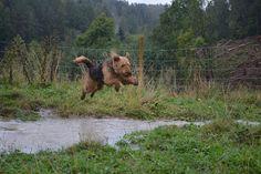 Gårdstunet Hundepensjonat: Vann,vann,vann.....og SPRETNE hunder!