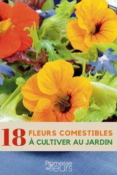 Fleurs comestibles : cultivez-les pour les utiliser en cuisine, en salade ou gâteaux