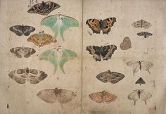 Album-of-Sketches-butterfly04.jpeg 897×619 pixels Maruyama Ōkyo
