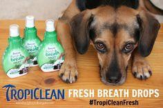Goodbye Bad Dog Breath! #TropiCleanFresh   http://www.beaglesandbargains.com/goodbye-bad-dog-breath-tropicleanfresh/