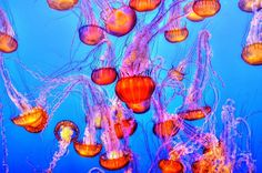 It's a question that has divided opinion for a long time; how do you treat a jellyfish sting? Well, let Aqualease guide you, and no, it doesn't involve wee!
