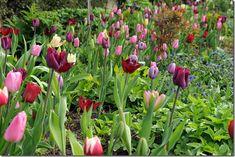 Inspiration For Fall Bulb Planting: With Jacqueline van der Kloet