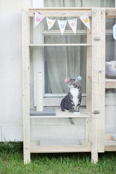 Cat Care Cat sitting inside catio - Here is The Ultimate Collection of IKEA Hacks For Pets for you! You will find fun things for your dogs and your kitty cats! Cat Shelves, Ikea Shelves, Ikea Cat, Outdoor Cat Enclosure, Diy Cat Enclosure, Cat Run, Cat Hacks, Outdoor Cats, Pet Furniture