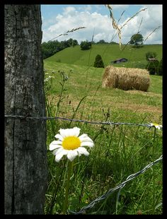 ❤❤❤❤❤ - bales of sweet hay for the livestock