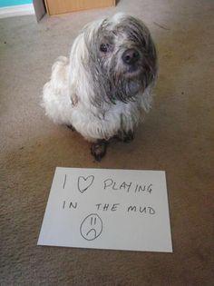 «Amo giocare nel fango» (Dogshaming.tumblr.com)