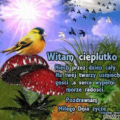 Amazing Weddings, Good Morning, Memes, Funny, Pictures, Polish, Bom Dia, Photos, Buen Dia