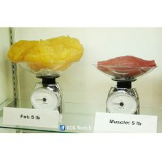 """madeupmonkeyshit: """" sixpenceee: """" Five pounds of fat compared to five pounds of muscle. """" Sooooo muscle does weigh more than fat? """" Muscle is more dense than fat, and thus the same volume of fat. 5 Lbs Of Fat, Pound Of Fat, 1 Pound, Fat Vs Muscle, Muscle Weight, Muscle Mass, Health And Wellness, Health Fitness, Workout Fitness"""