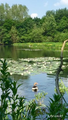 The pond in Bakkum.