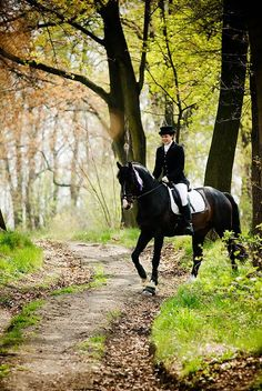 Horse, dressage rider and beautiful bridle trail.
