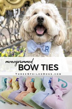 Beautiful Monogrammed Dog Beds