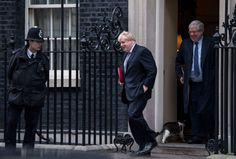 Larry, il gatto patriottico di Downing Street: nuovo collarino con la bandiera del Regno Unito