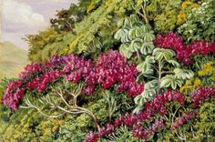 A Bank of Quaresma and Trumpet Trees, Brazil by Marianne North; c. 1873; Oil on board; Collection: Royal Botanic Gardens, Kew, England