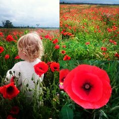 We found a field of poppies on the way home from work!