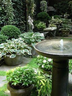 Shade garden containers - Simple water feature in a Townhouse Garden Townhouse Garden, London Townhouse, Hosta Gardens, Water Gardens, Water Features In The Garden, Shade Plants, Pot Plants, Garden Spaces, Shade Garden